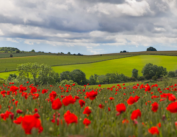Visit Midsomer countryside