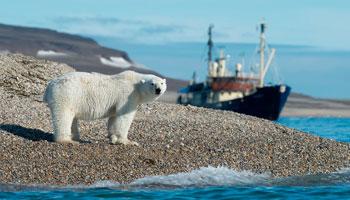 Cruising in the Arctic